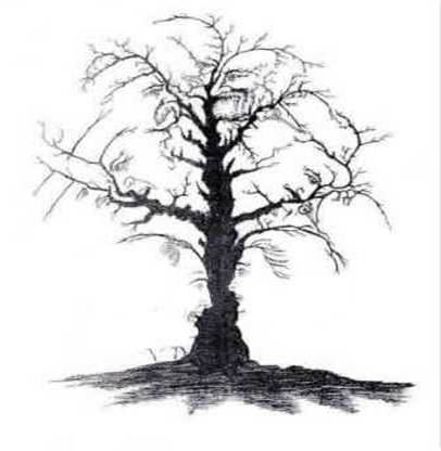 Can you see 10 faces in the tree?